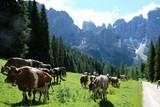 mucca animale fattoria erba panorama montagna natura verde bosco foresra alberi bestiame fattoria campo pascolo rurale
