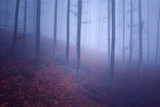 Dreamy pink blue colored foggy mountain forest landscape.  - 220825909