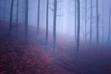 Dreamy pink blue colored foggy mountain forest landscape.  © robsonphoto