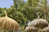 Straw umbrellas and leafy trees, Marbella, Spain - 220832352