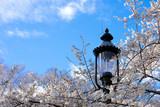 Spring - 220832903