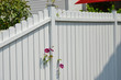 canvas print picture - Weiß lackierter Lattenzaun mit Edelstahl- Schutzkappen auf den Pfosten und zwischen den Latten durchwachsender Blume (Clematis)