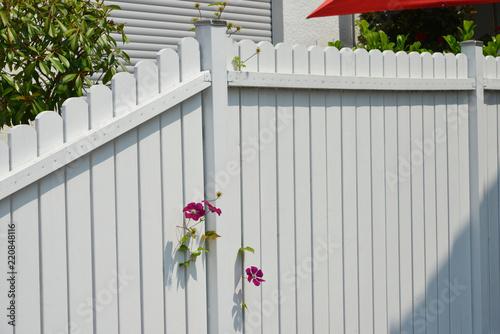 canvas print picture Weiß lackierter Lattenzaun mit Edelstahl- Schutzkappen auf den Pfosten und zwischen den Latten durchwachsender Blume (Clematis)