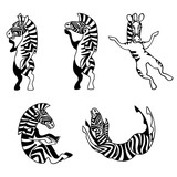 Vector set of Zebra images in different poses
