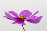 wunderschöne lila Blüte als Makro - 220874710