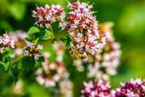 Bees gathering nectar - 220874997