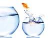 Leinwanddruck Bild - Goldfish Jumping  to bigger aquarium isolated on white