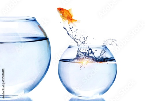 Leinwanddruck Bild Goldfish Jumping  to bigger aquarium isolated on white
