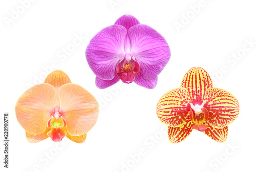 Fototapeta Close-up of orchid flpwer isolated on white