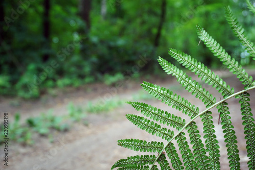 A fern leaf with seeds close-up against a forest background.