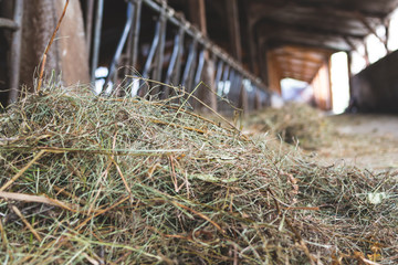 Cowshed for cows- Agriculture template background © Mike Fouque