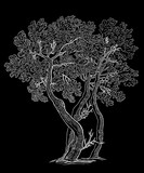 Vector image of decorative oak trees