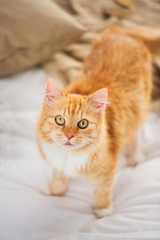 pets and hygge concept - red tabby cat in home bed © Syda Productions
