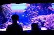 Leinwandbild Motiv kids-boy and girl- watching fishes in aquarium