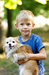 Blond boy holding dog of Chihuahua breed for 4 years, portrait, smiling uncertainly