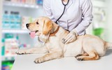 Young female vet with dog on light blurred background