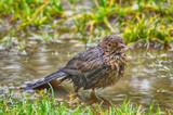 oiseau sorti de bain - 220974149