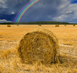 Agricultural countryside landscape with  harvesting of cereals and rainbow above horizon. Rich harvesting concept © sergei_fish13