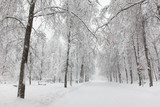 Snowfall in the park, snowy winter road, snow covered trees landscape. Bad weather concept - 221002347