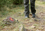 Hiking ,trekking in mountains . Close up of women's Hiking Boots - 221008184