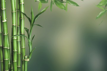 Many bamboo stalks  on background © BillionPhotos.com