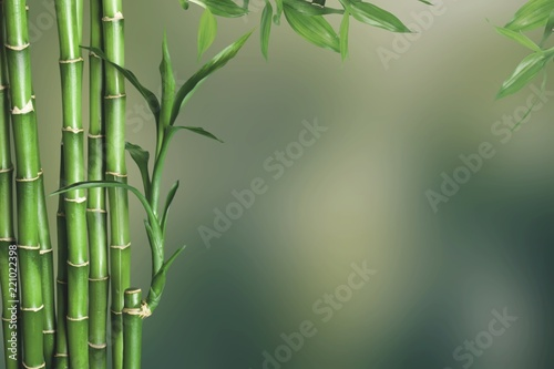 Fototapeta Many bamboo stalks on background