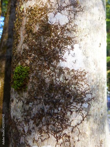 tree - 221039742