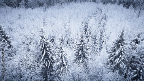 Fir trees covered with snow - 221043592