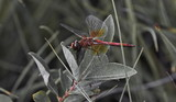 dragonfly in a natural environment - 221063378