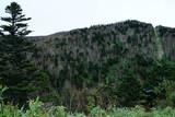 山の斜面に根を張る木々 - 221066992
