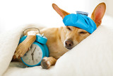 dog  sick or ill  in bed