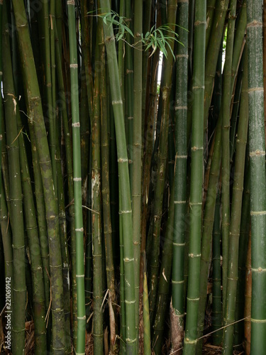 green bamboo nature background - 221069142