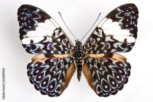 Butterfly - 221089561