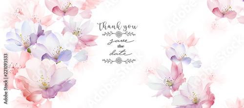 Elegant rose flower - 221093533
