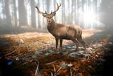 Hirsch im herbstlichen Wald bei Sonneneinfall - 221095745