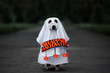 Leinwanddruck Bild - dog in a ghost costume holding a happy halloween sign outdoors at night