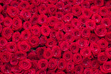 red roses background - 221112906