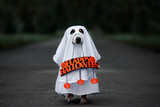 dog in a ghost costume holding a happy halloween sign outdoors at night - 221112937