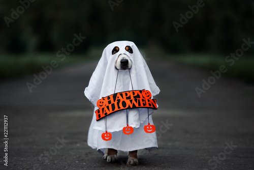Leinwanddruck Bild dog in a ghost costume holding a happy halloween sign outdoors at night