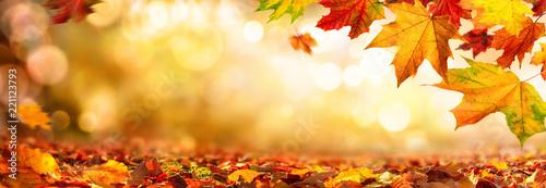 Bunte Blätter im Herbst verzieren einen breiten unscharfen Hintergrund im Wald - 221123793