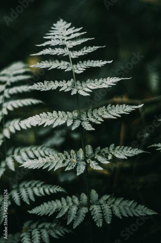 Green fern leaves in a dark forest. Dark Light, Background. - 221133526
