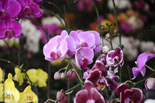Colorful Tropical Amp Exotic Orchids Flower In Plants Nursery