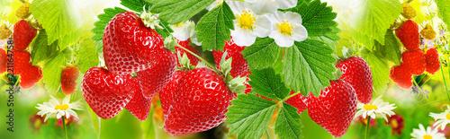 sweet ripe strawberries background - 221164758