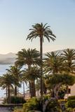 Alpes-Maritimes (06) Cannes - 221167599