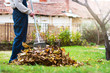 Leinwanddruck Bild - Man collecting fallen autumn leaves in the yard