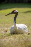 Oiseau majestueux - 221171108