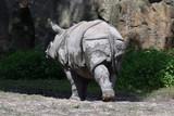 Back view of cute rhinoceros, closeup - 221175972