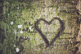 Heart shape carved into the bark - 221196102