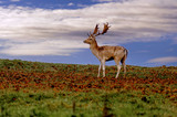 Deer in the natural scenery - Sunset - 221199525