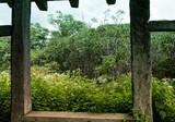Green Foliage Through Timber Window - 221218363